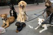 Img trucos no perder perro paseo listado