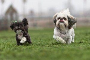 Img trucos para no perder perro paseo correa chapa art