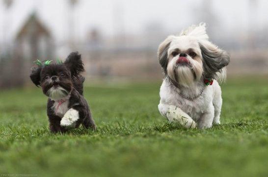 Img trucos para no perder perro paseo correa chapa
