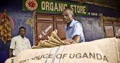Img ugandacafeacpcufotointermonoxfam