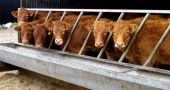Img vacas