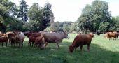 Img vacas pastando