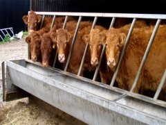 Img vacas1