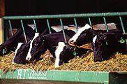 Img vacas1e