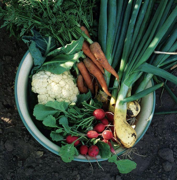 img_vegetales 9