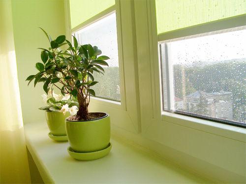Img ventana