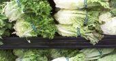 Img verduras