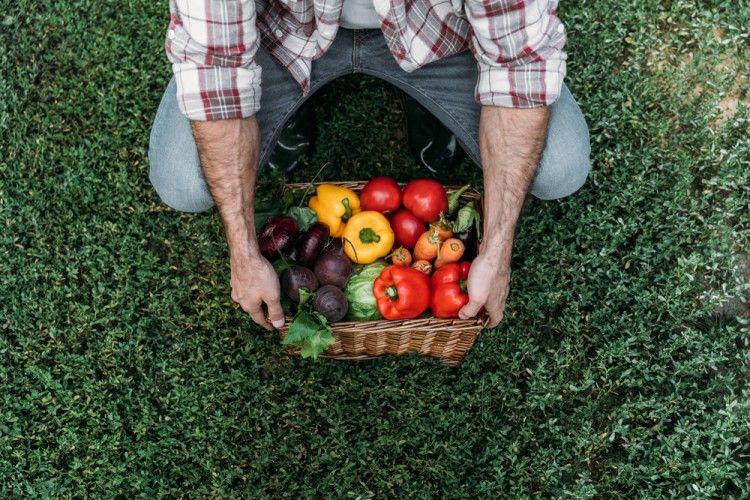 Img verduras vida ecologica sostenible art