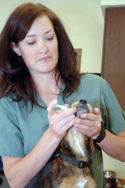 Img veterinarianuestra
