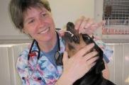 Img veterinario dientes listado