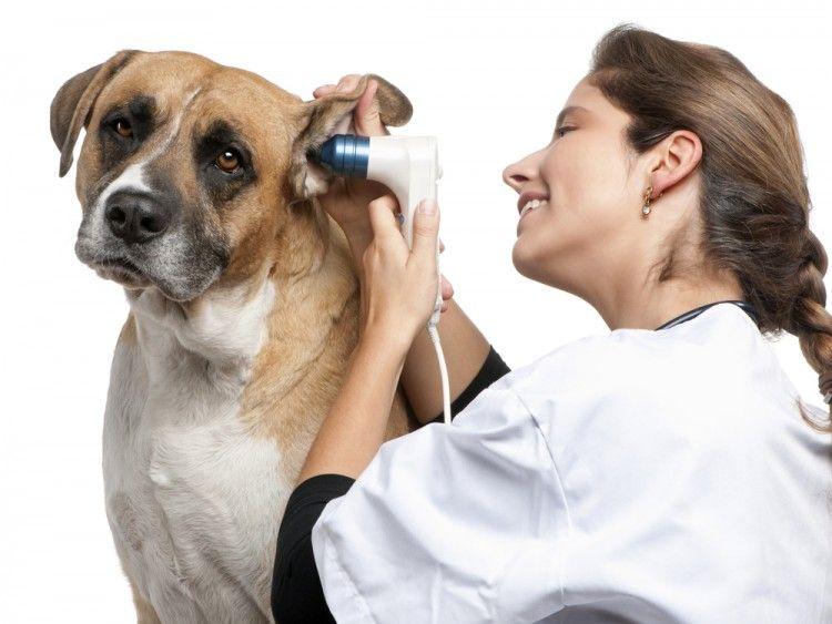 Img veterinarios cada cuanto tiempo perros gatos art