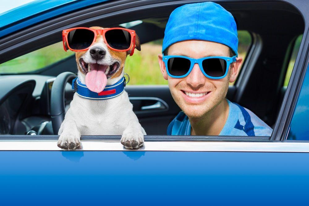 Img viajar mascotas perros coches