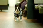 Img viajar metro perro cuestion tamano listado