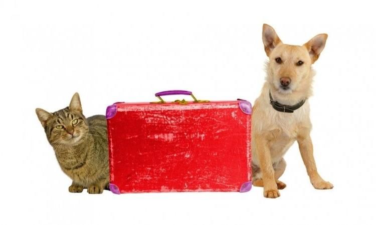 Img viajar perros gatos navidad grande