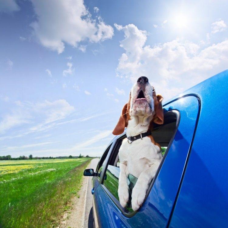Img viajar perros gatos semana santa art