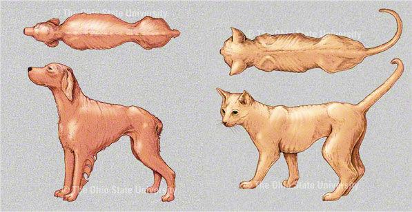 Su Perro Está Flaco O Gordo Estos Dibujos Le Ayudarán A