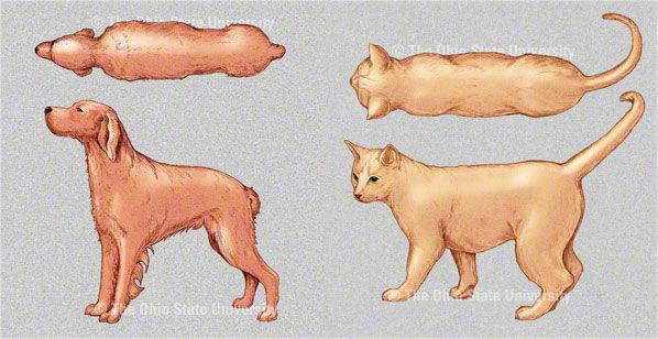 Img x 3 delgado perros gatos