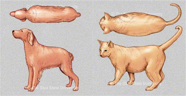Img x 4 delgado perros gatos