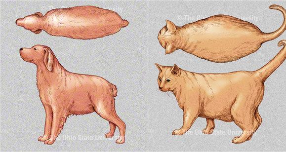 Img x 5 delgado perros gatos