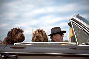 Viajar con perro problema