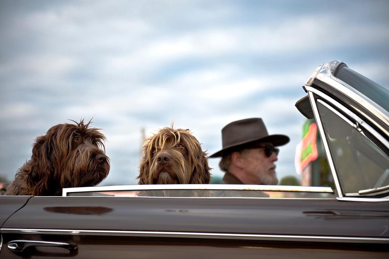 Viajar con perro no es un problema