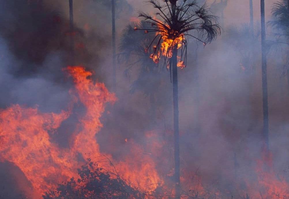 Incendio Amazonas Bolivia By Kaninde