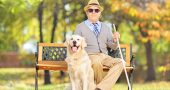 Senior blind gentleman sitting on a bench with his dog, in a par