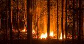 incendio forestal bosque