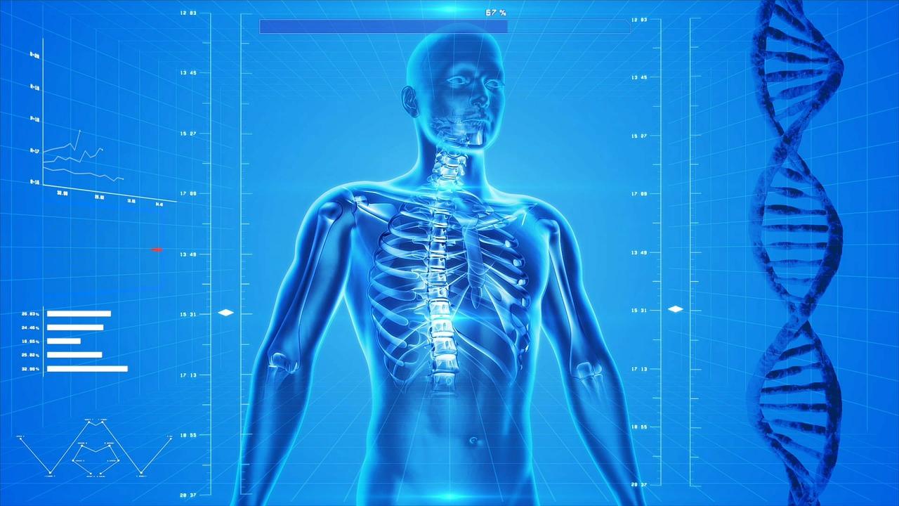 Esqueleto cuerpo humano