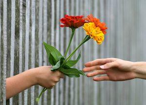 dar flores regalo