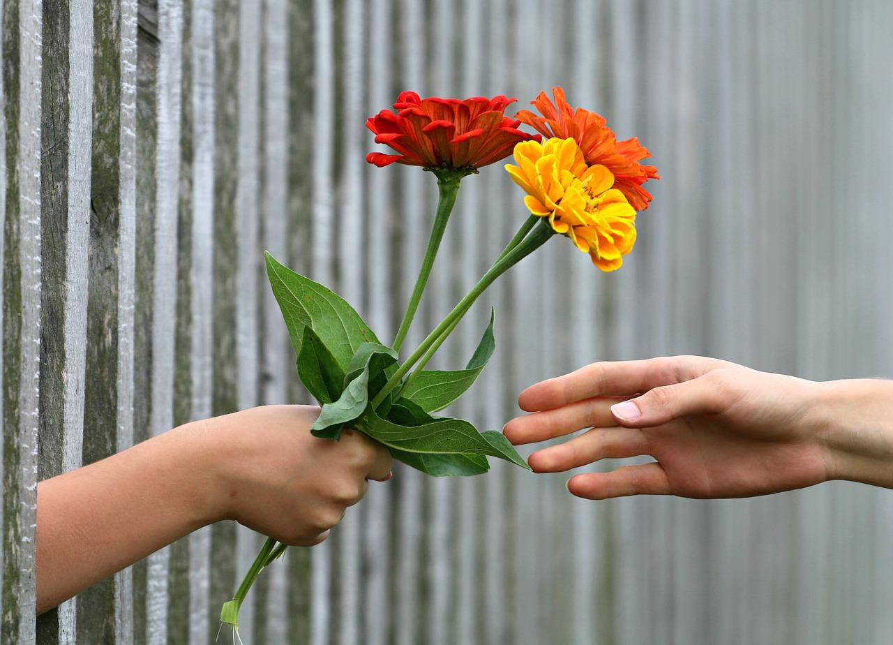 Mano flores regalo