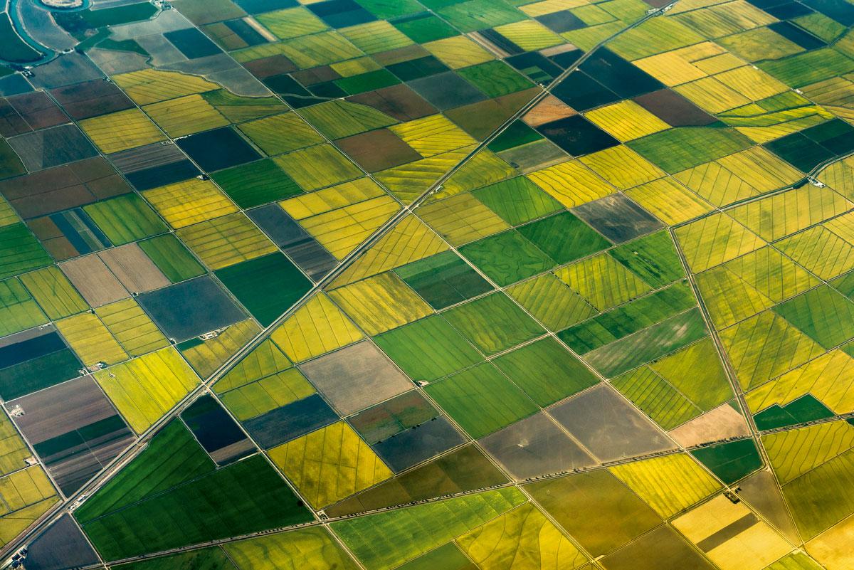 Campo cultivo agro