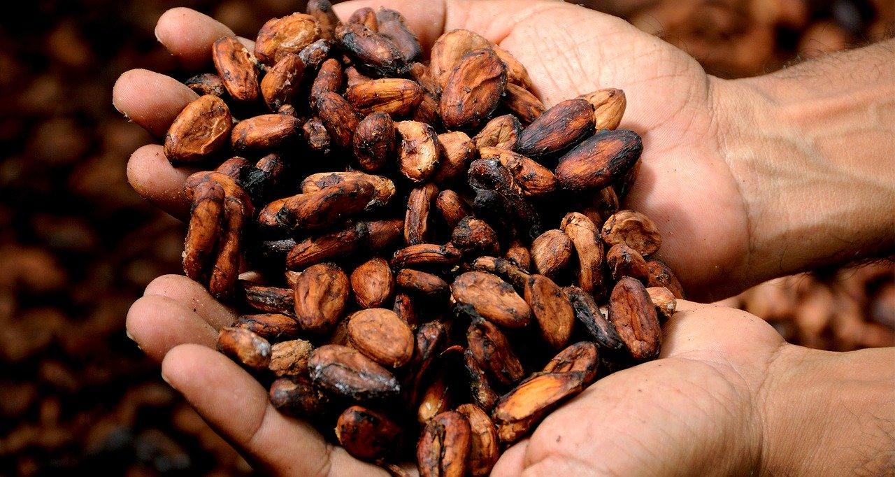 Manos cacao