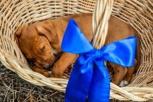 Perro mascota regalo
