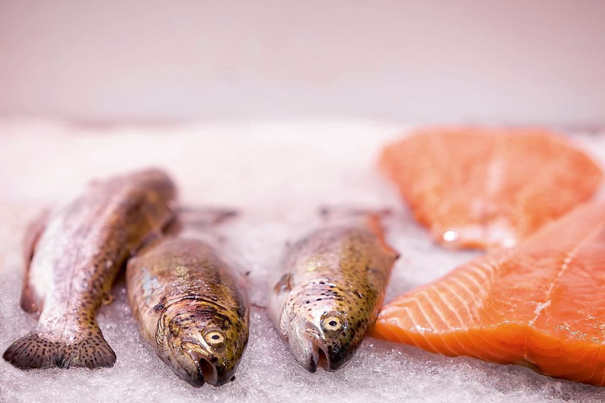 Pescado salmon hielo