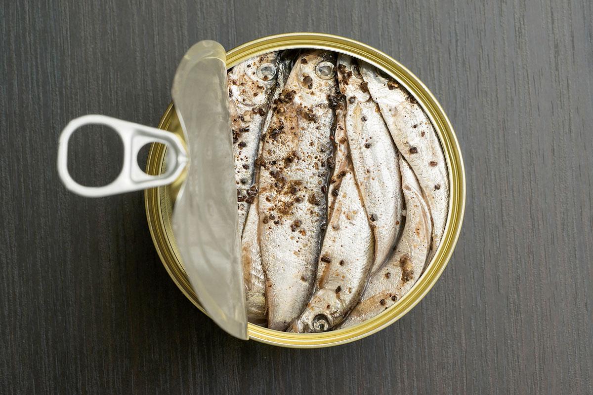 sardinas lata conserva pescado