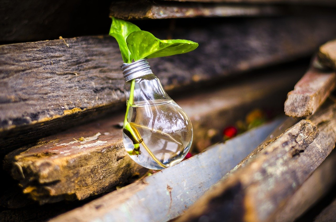 bombilla planta reciclaje medio ambiente