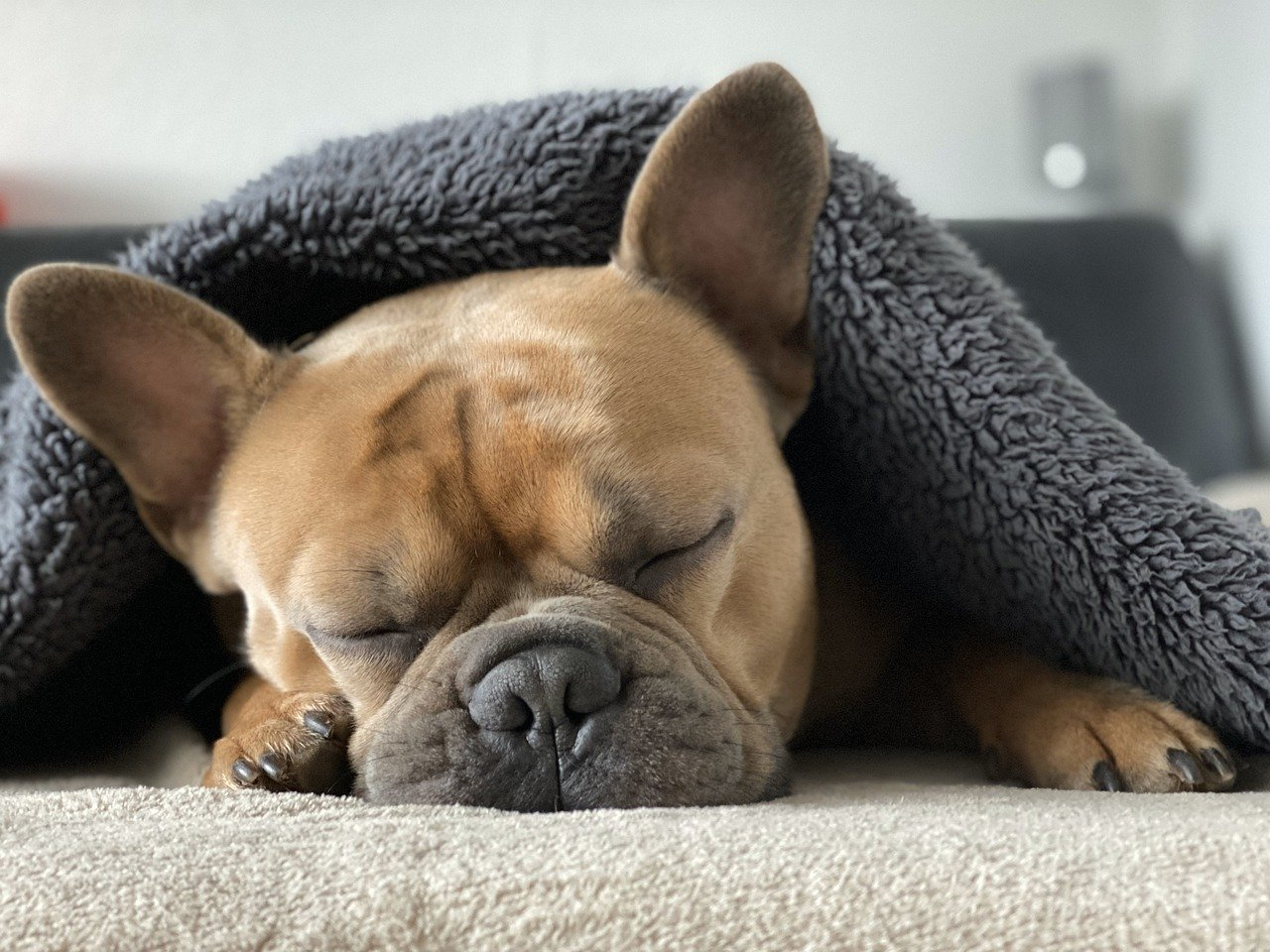 Perro mascota fisioterapia