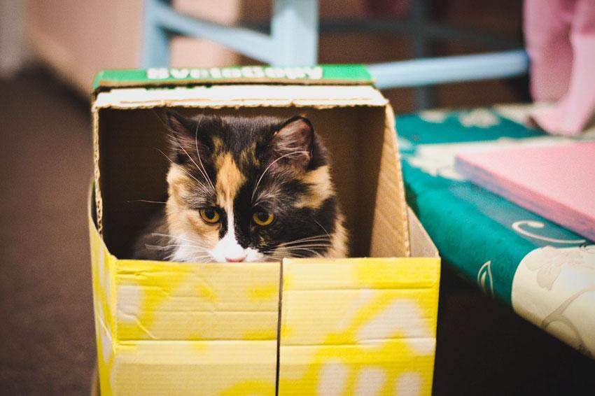 gato jugar caja