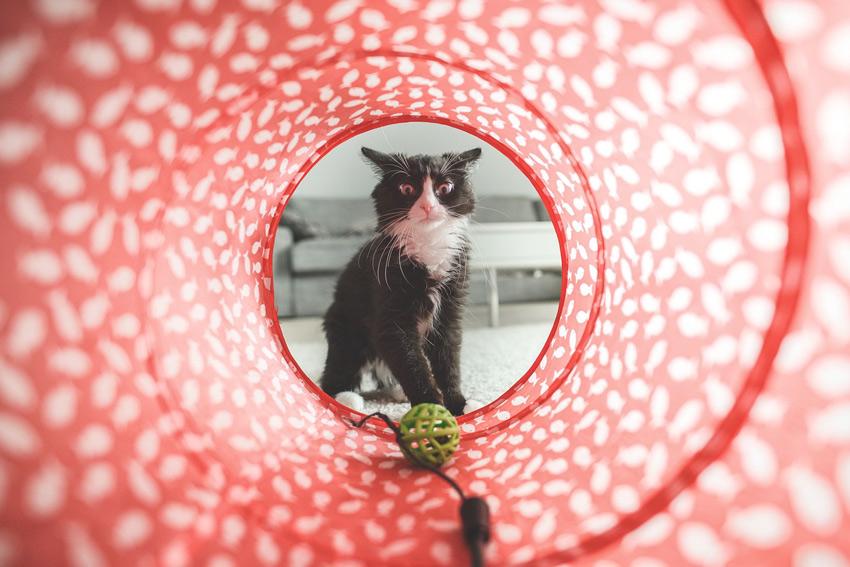 Cómo jugar con tu gato, los cinco juegos más divertidos