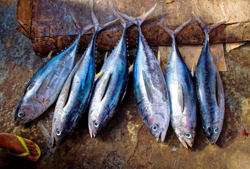 evidencia pescado