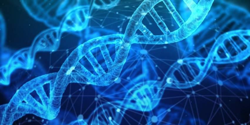 test genetica