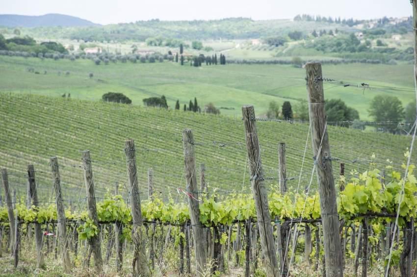vino agricultura ecologica