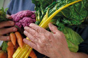 alimentos sanos tercera edad
