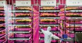 industria alimentaria innovacion cultivo infrarrojos