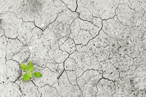 cambio climatico impacto seguridad alimentaria