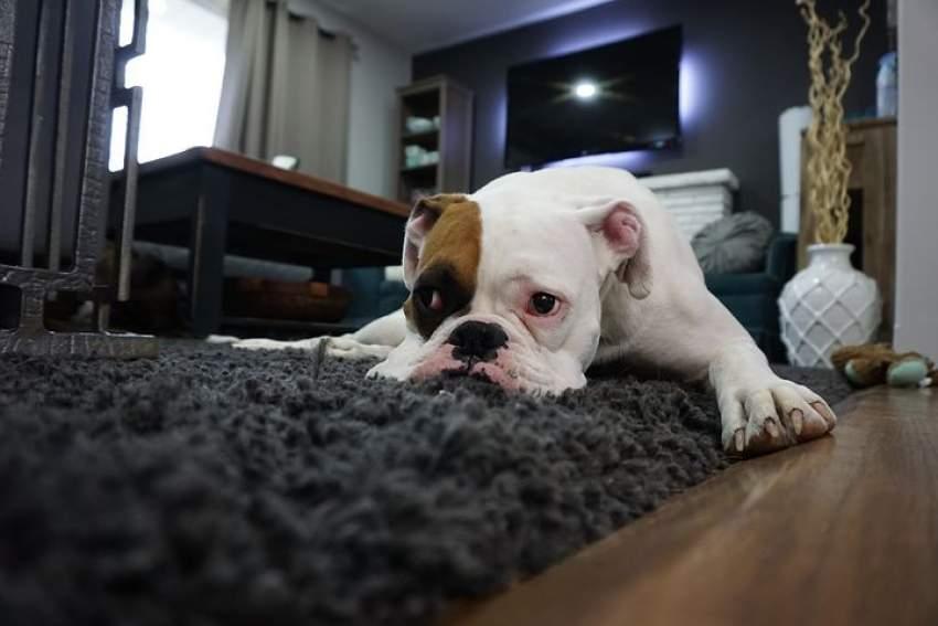 mascota casa alquiler