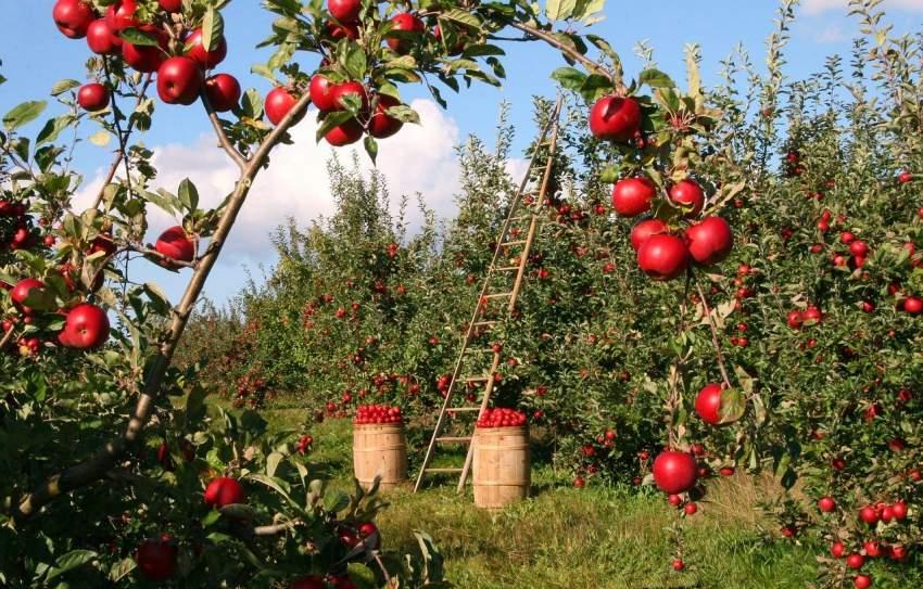 kilometro cero frutas