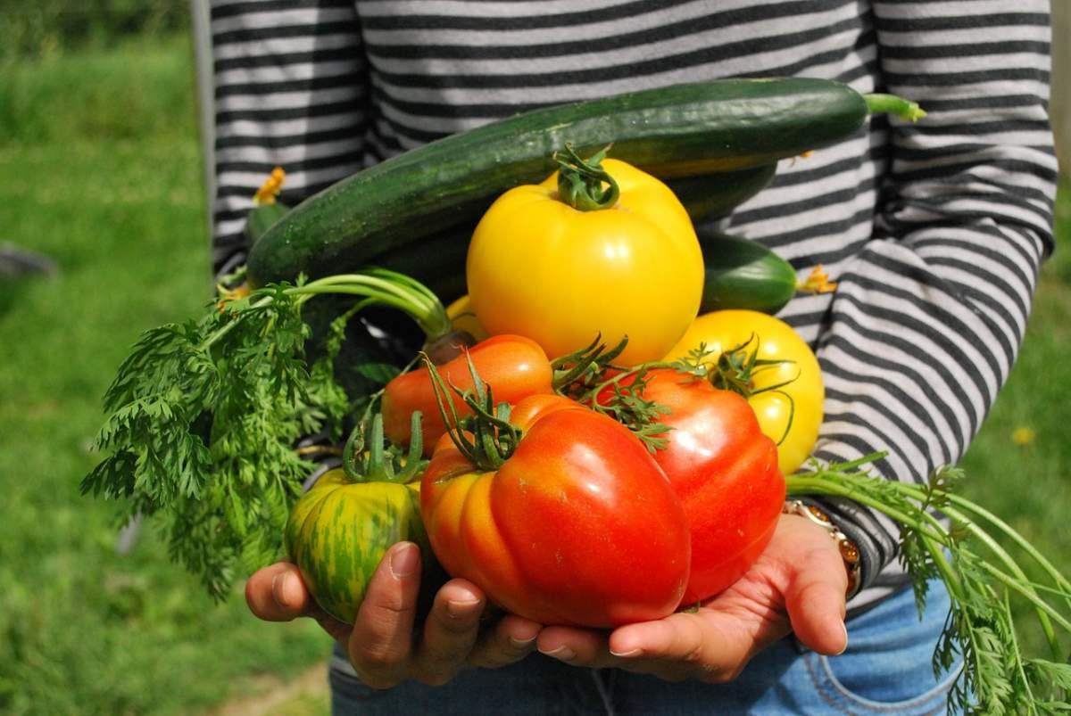 kilometro cero alimentos sostenibles