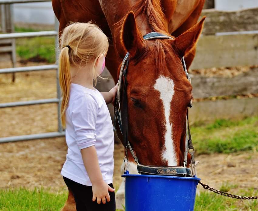caballo cuidados